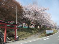 桜名所(愛宕山)