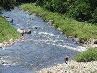 最上小国川でアユ釣りすねが~
