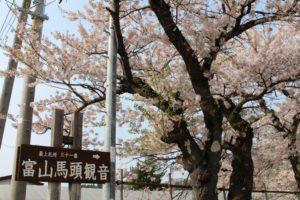 2018年参道の桜