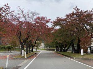 最上中学校 桜並木