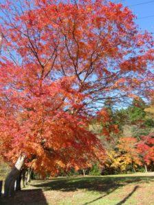 横川地区農村公園