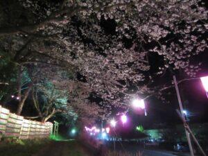 愛宕山ライトアップ